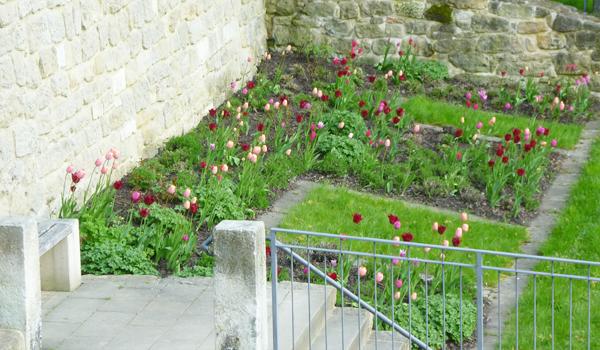 Tulpen am Schlossberghang